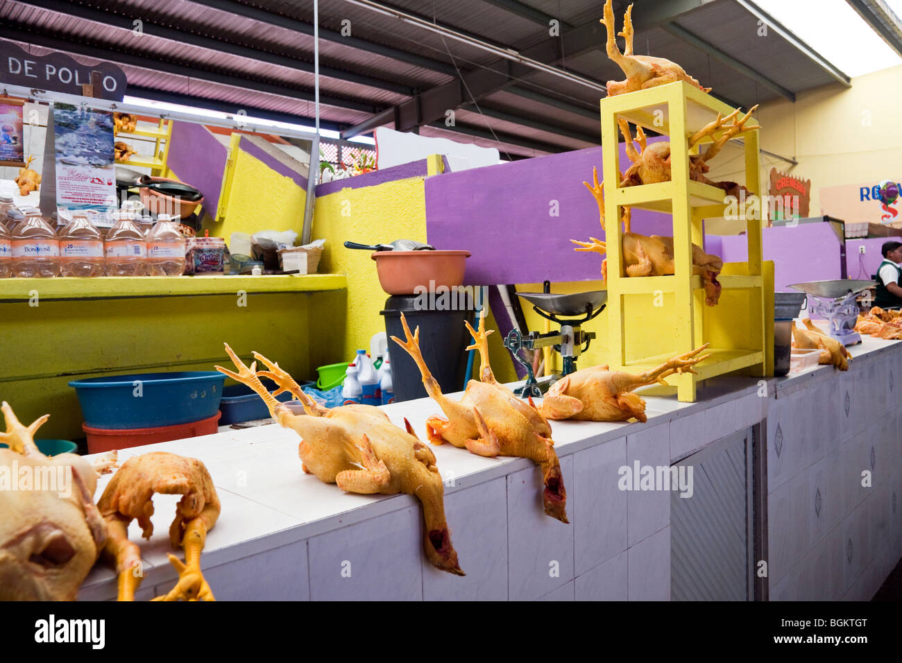 immaculate brightly colored poultry butcher stall with comical macabre display of whole chickens in Mexican market - Stock Image