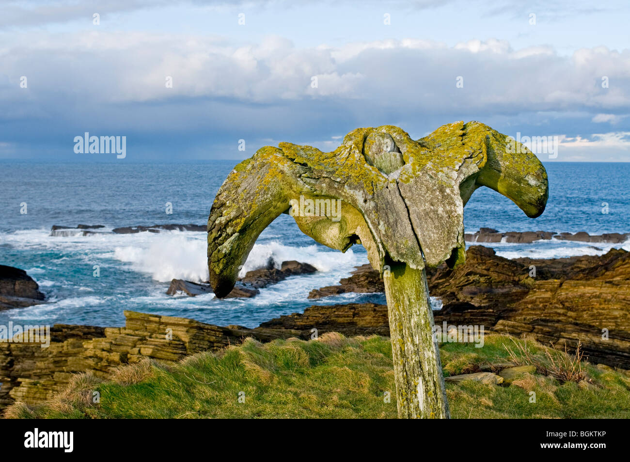 The Birsay whalebone erected on the coastal path from the remains of a beached whale c. 1876.   SCO 5870 - Stock Image