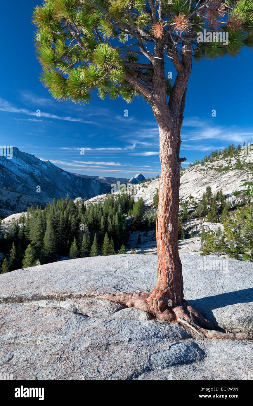 Granite rock and Half Dome. Yosemite National Park, California Stock Photo