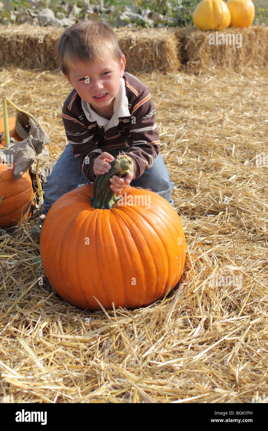 Young boy picking up pumpkin at pumpkin patch - Stock Image