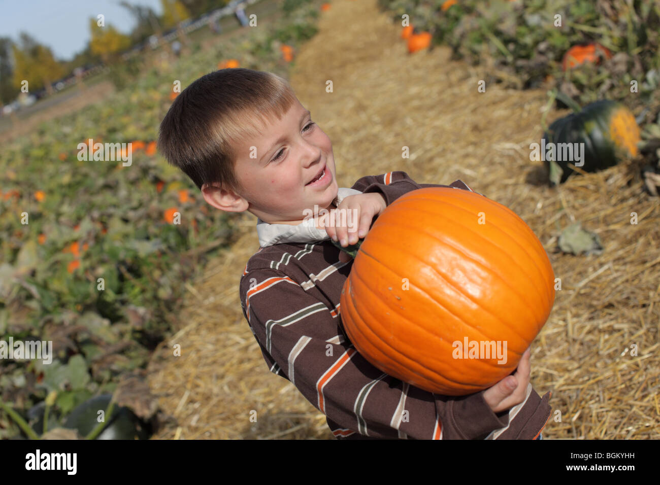 Young boy holding up pumpkin at pumpkin patch - Stock Image