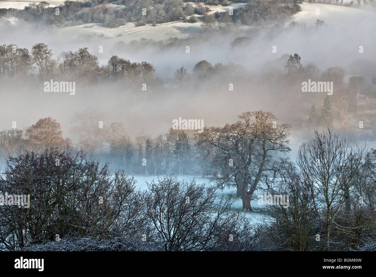 trees in winter countryside landscape - Stock Image