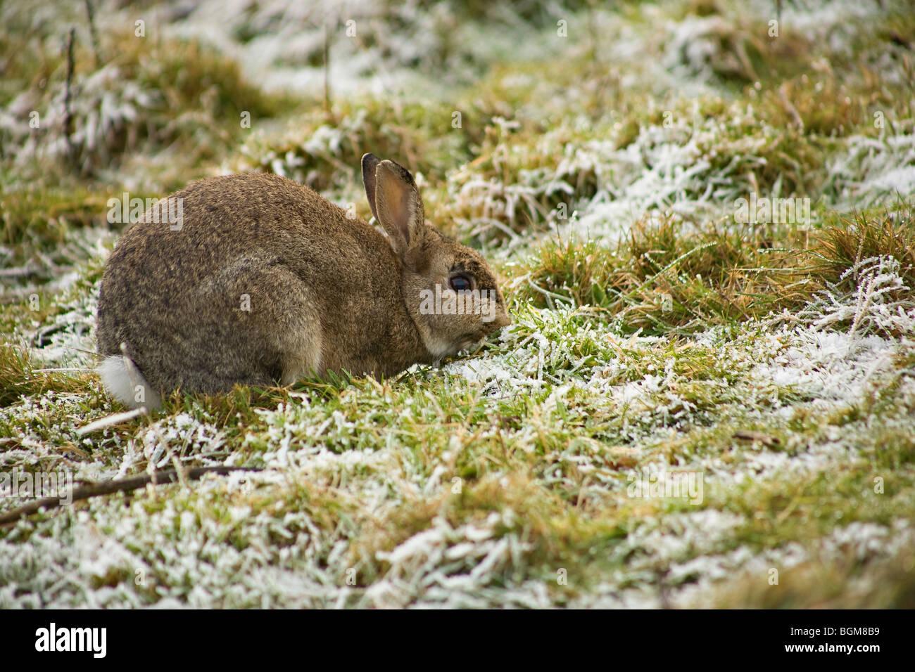 Rabbit Eating Grass Stock Photos & Rabbit Eating Grass Stock