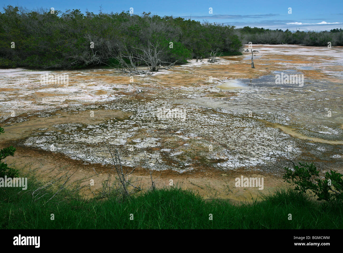 Shallow water of inland lake containing high concentration of bacteria on Isabela Island, Galápagos Islands, - Stock Image