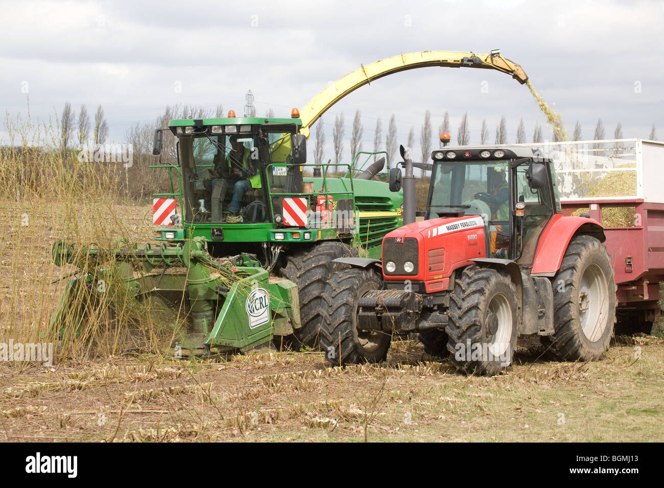 Harvesting Coppice Willow For Biomass For Power Stations In Nottinghamshire - Stock Image