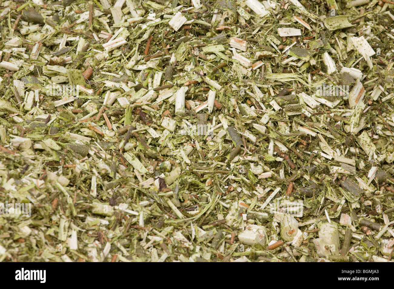 Coppice Willow For Biomass For Power Stations - Stock Image