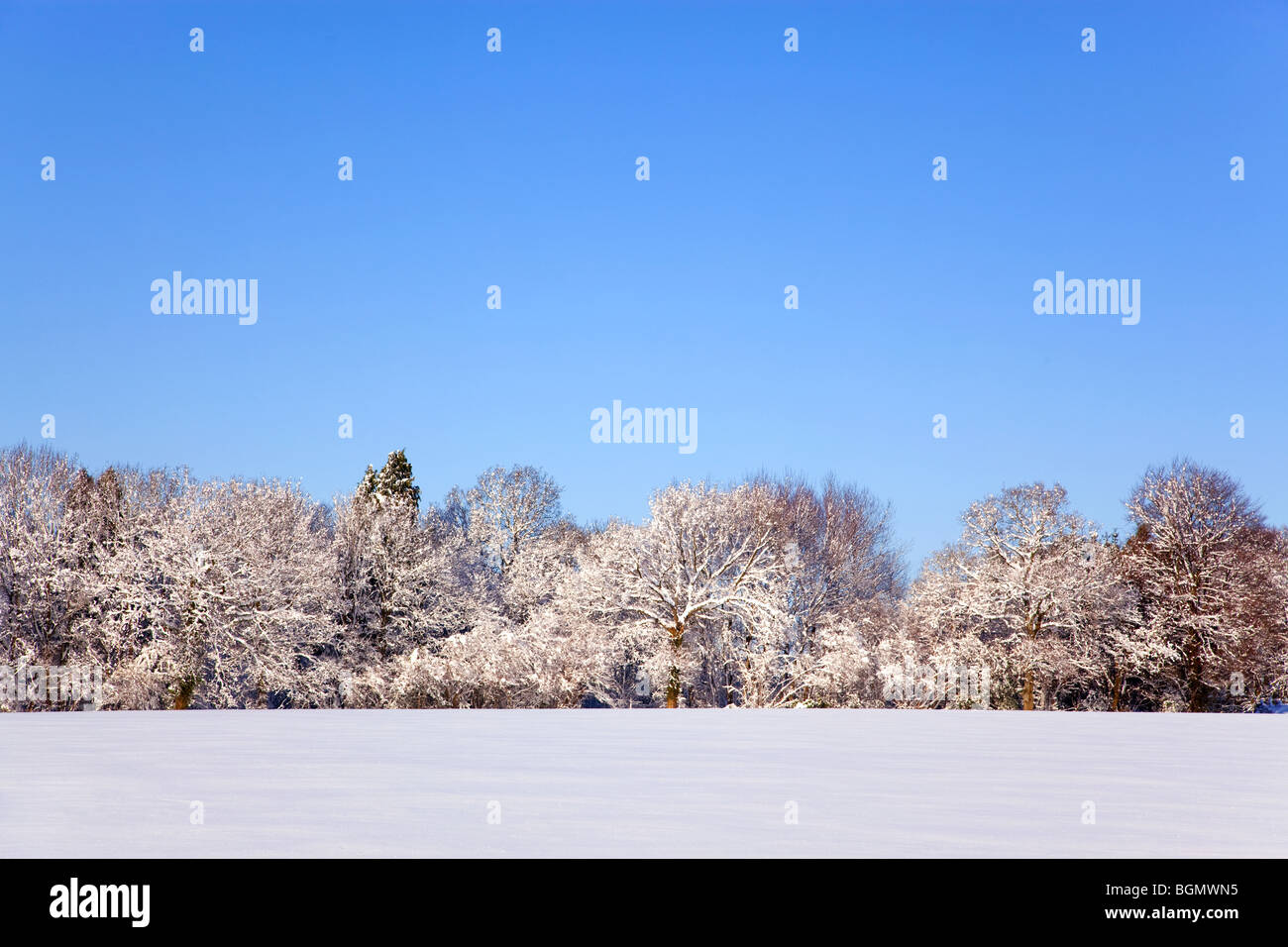 Landscape photo of a field and trees covered in fresh snow with a clear blue sky. - Stock Image