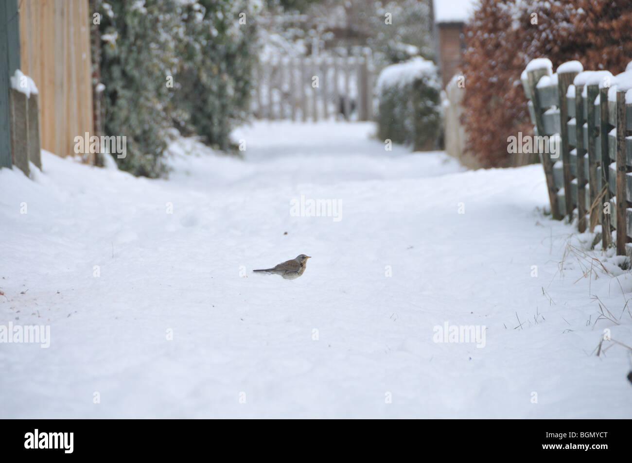 Birds in winter - Stock Image