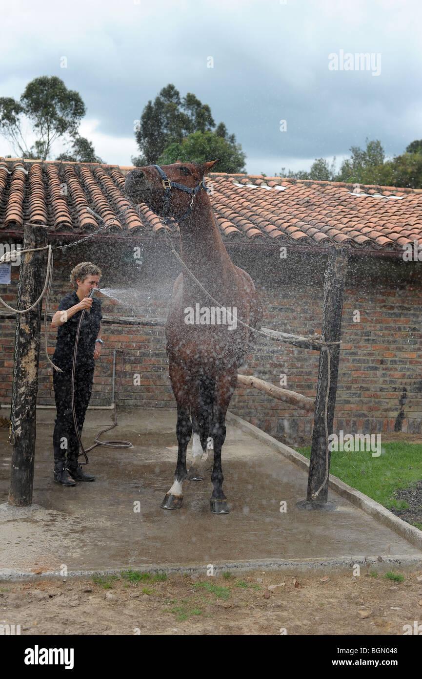 Hosing big bay horse  Bogota, Colombia, South America - Stock Image