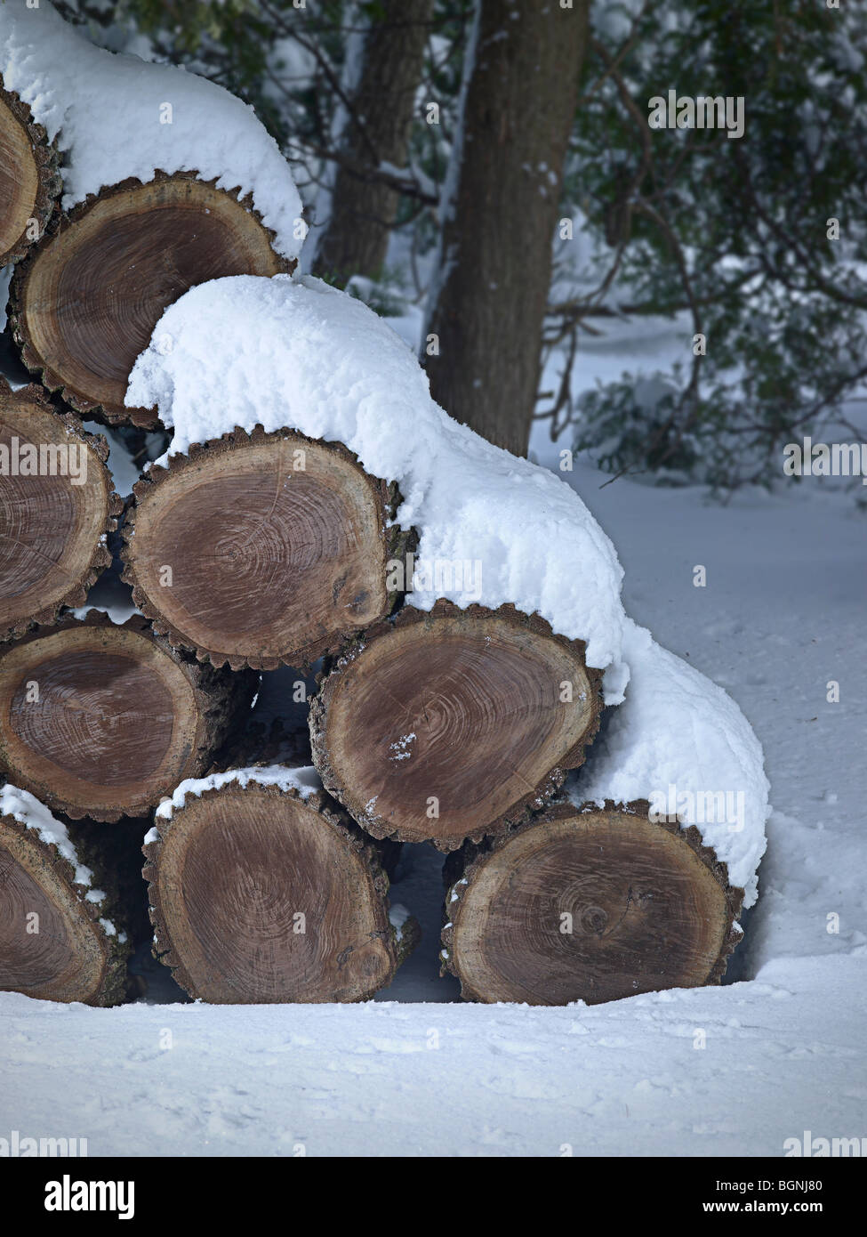 Cut Firewood Logs In The Snow, Pennsylvania, USA - Stock Image