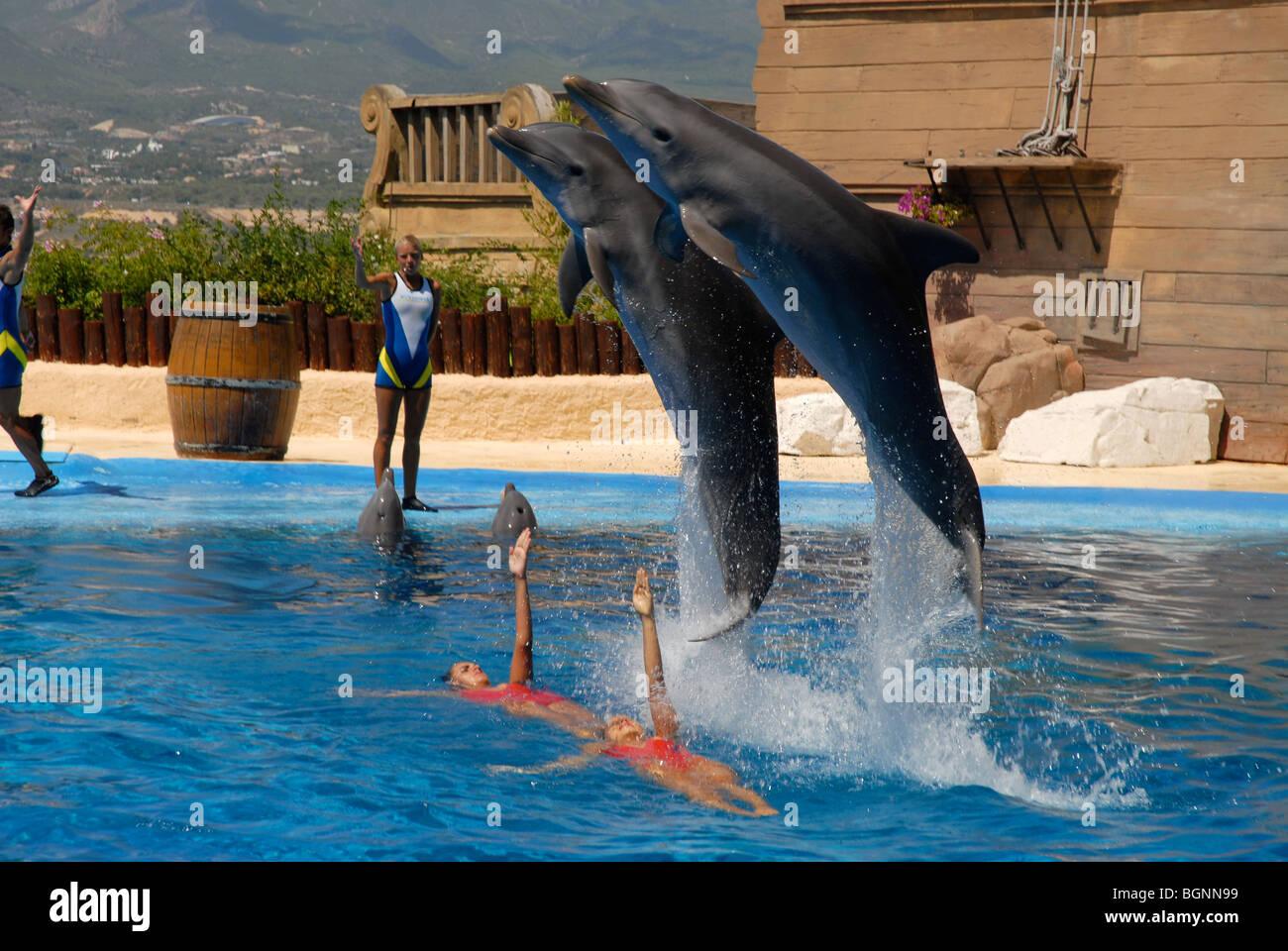 dolphins jumping at Dolphin Show, Mundomar, Benidorm, Alicante Province, Comunidad Valenciana, Spain Stock Photo