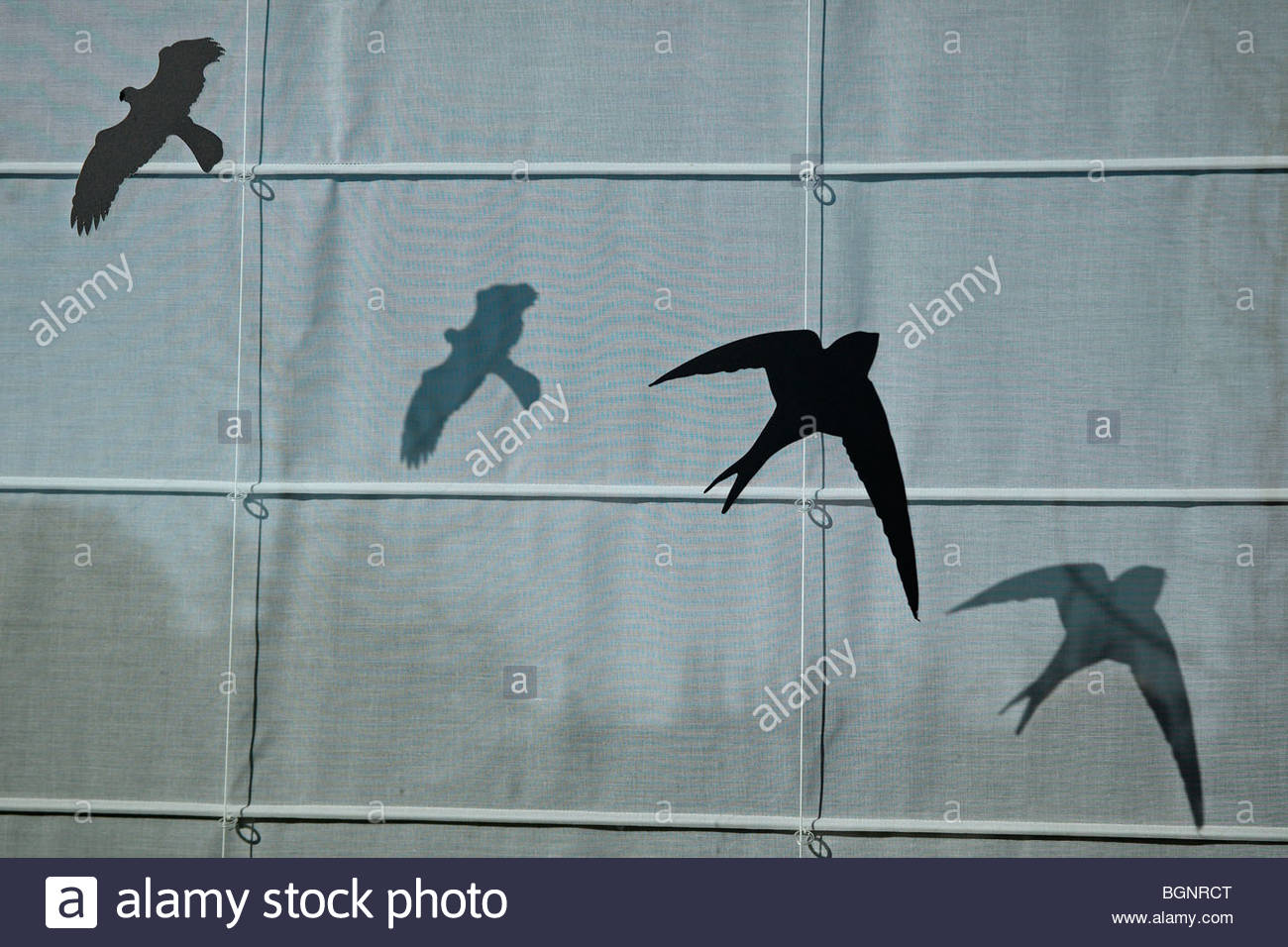 Stickers of silhouetted birds of prey shapes to avoid crashing into windows - Stock Image