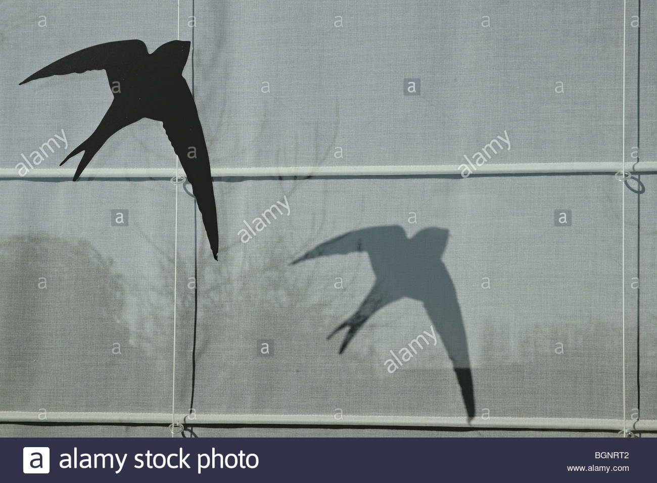 Sticker of silhouetted bird of prey shape to avoid birds crashing into window - Stock Image