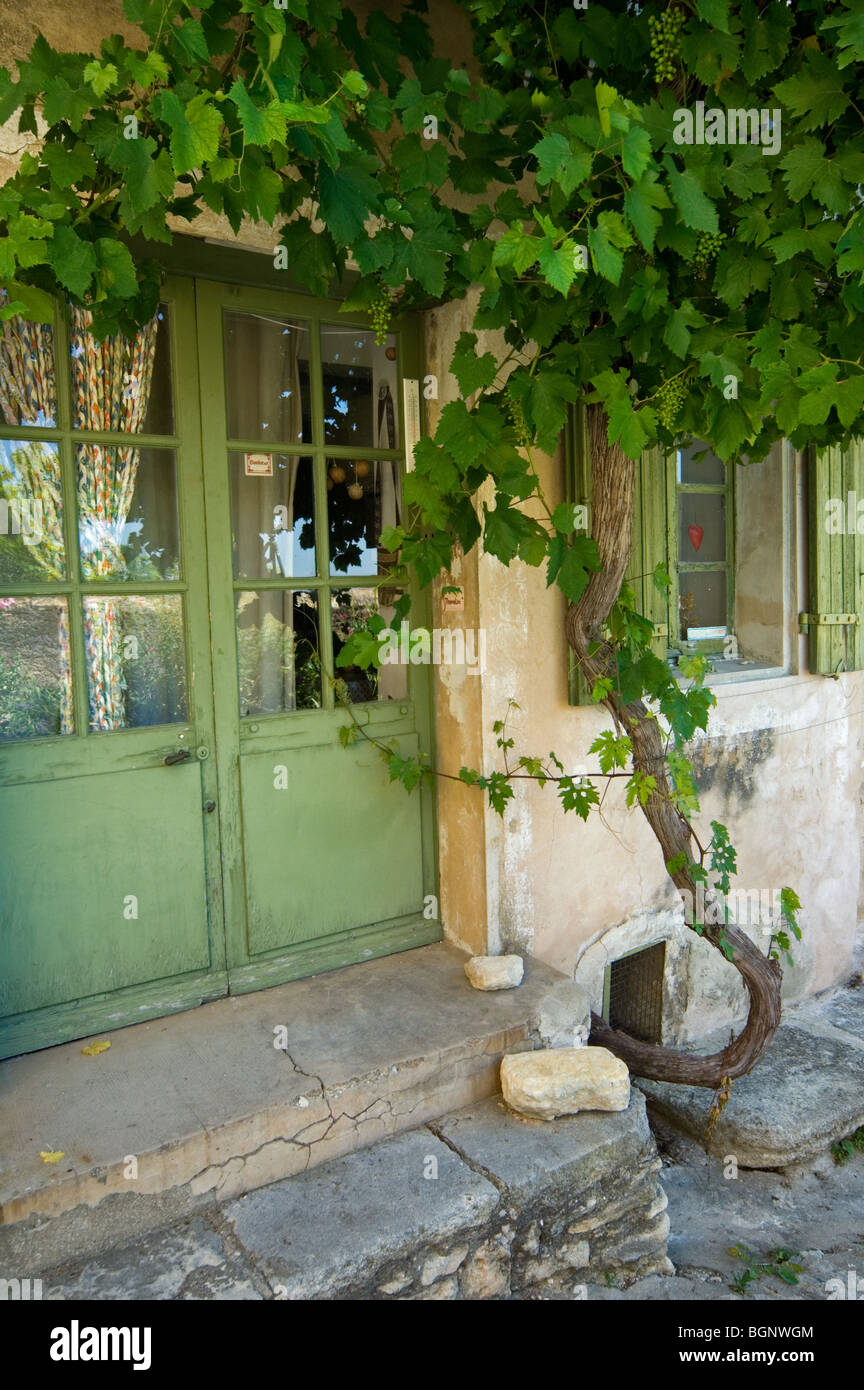 Grapevine Growing On House Front In Alley Of The Village Gordes In The  Vaucluse, Provence Alpes Côte Du0027Azur, Provence, France