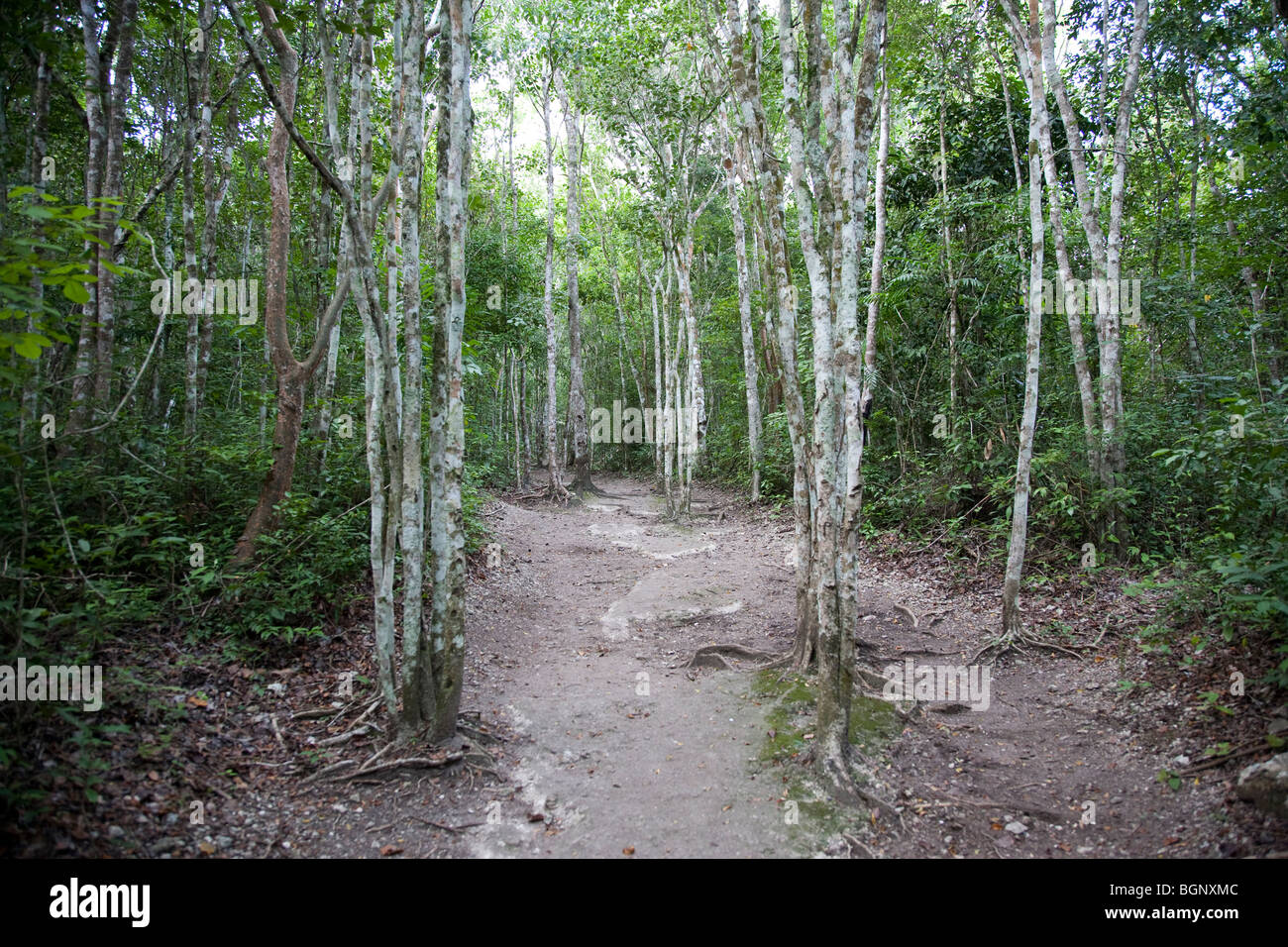 Xpujil Maya Ruins archaeology site, Campeche Mexico. - Stock Image