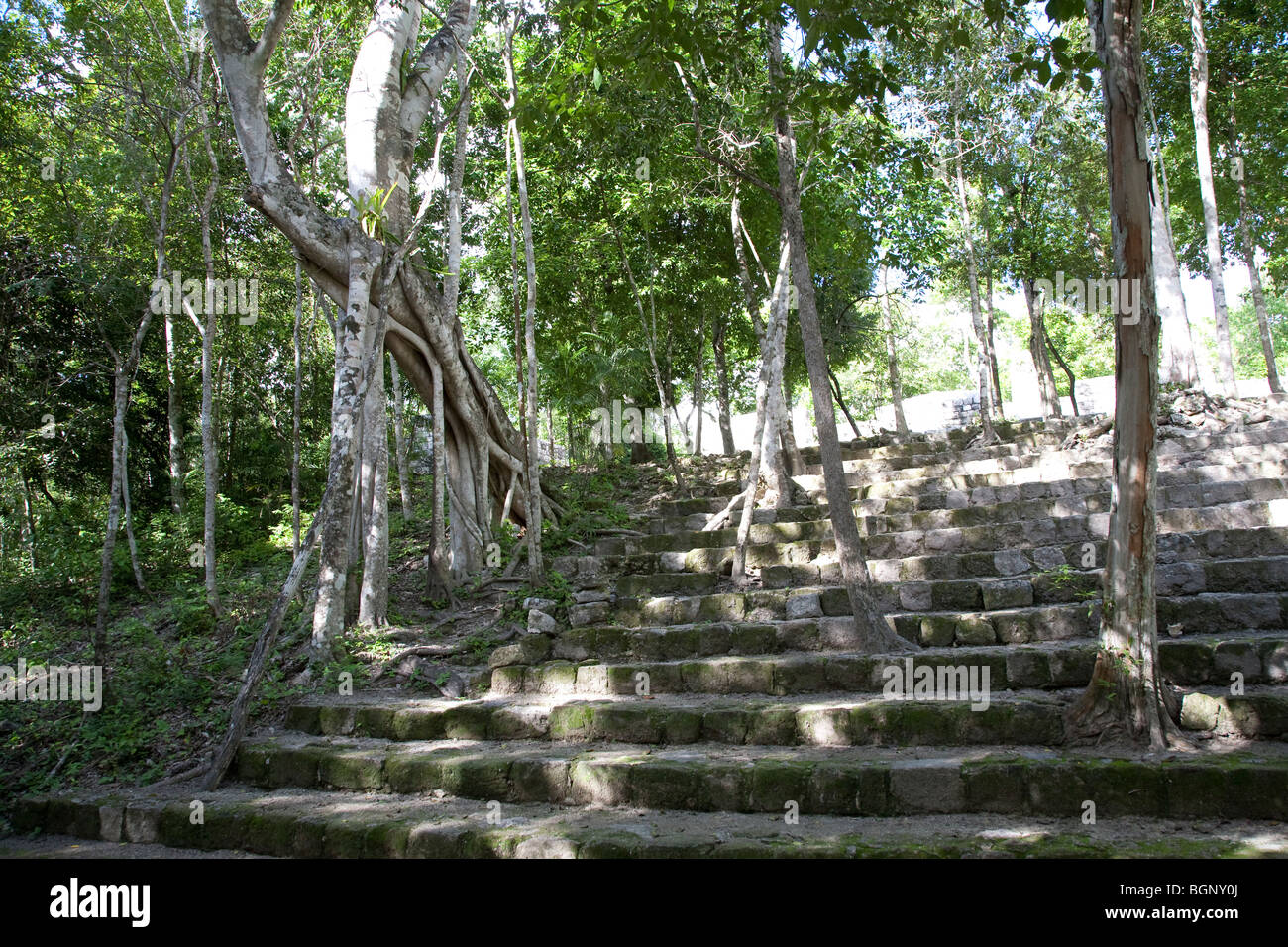 Calakmul Maya Ruins archaeology site, Campeche Mexico. - Stock Image