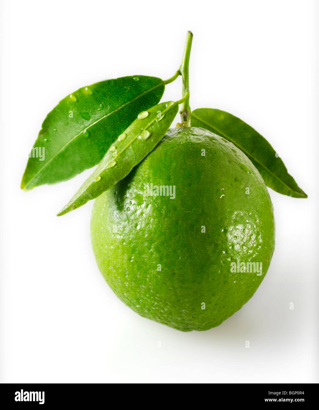 Fresh lime with leaves - Stock Image