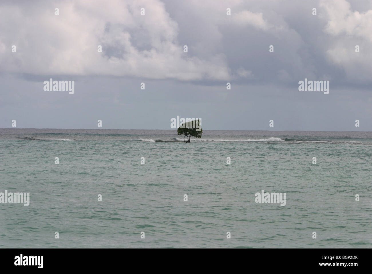 Solitary tree on the beach on the island of Kiribati in the Pacific Ocean - Stock Image