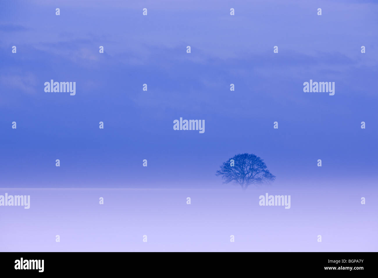 Lonesome winter tree in Holland in the Kroonpolder near Drieborg, province Groningen, Netherlands - Stock Image