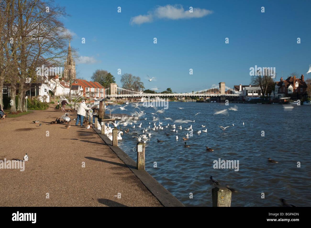 Feeding birds on the Thames promenade at Marlow in Buckinghamshire, Uk Stock Photo