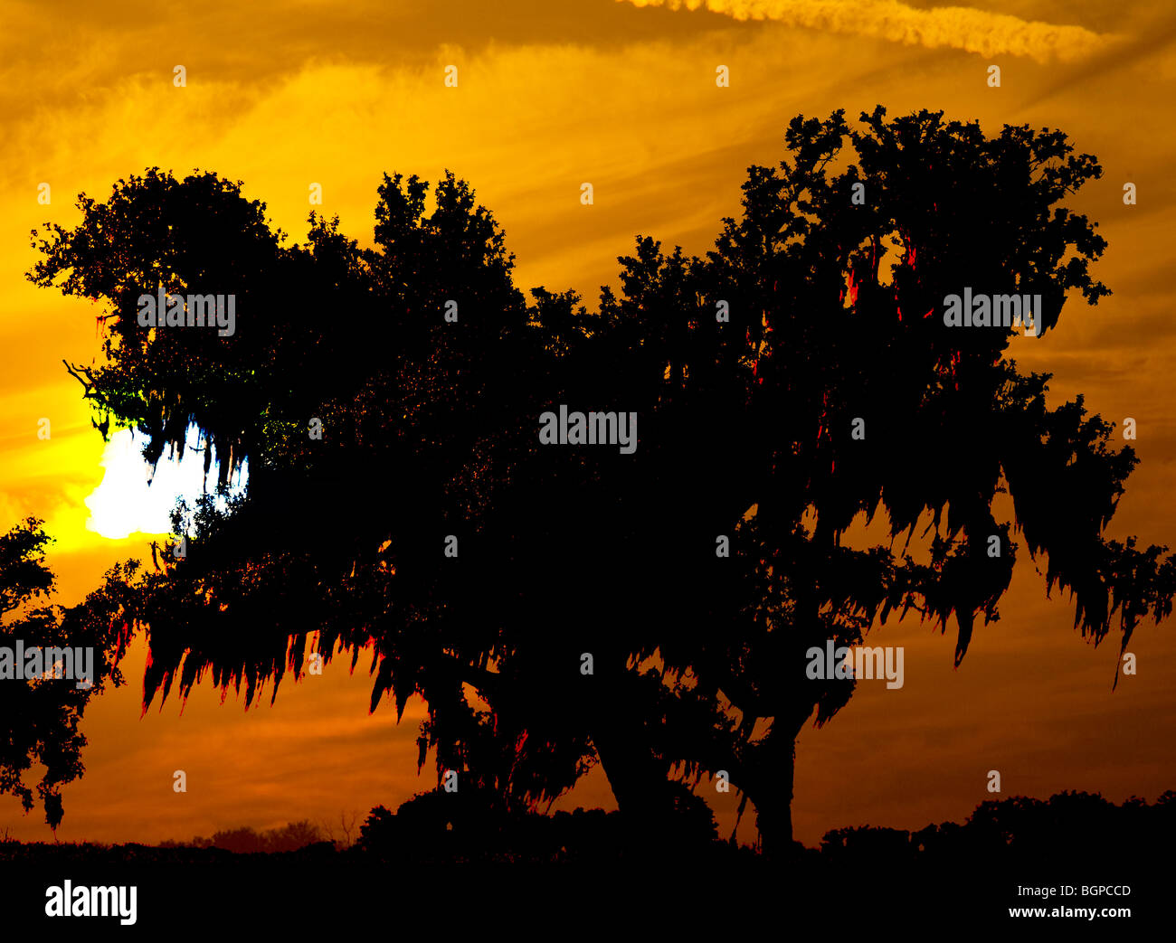 large sunset and moss draped oak trees - Stock Image