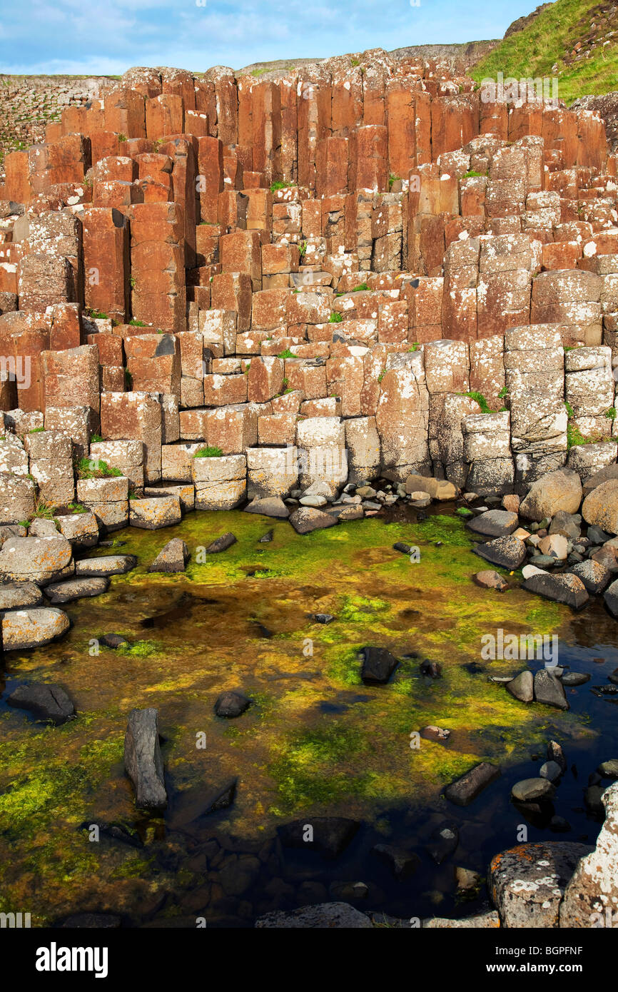 Red basaltic prisms at the Giant's Causeway Antrim Northern Ireland a natural phenomena and a world heritage - Stock Image