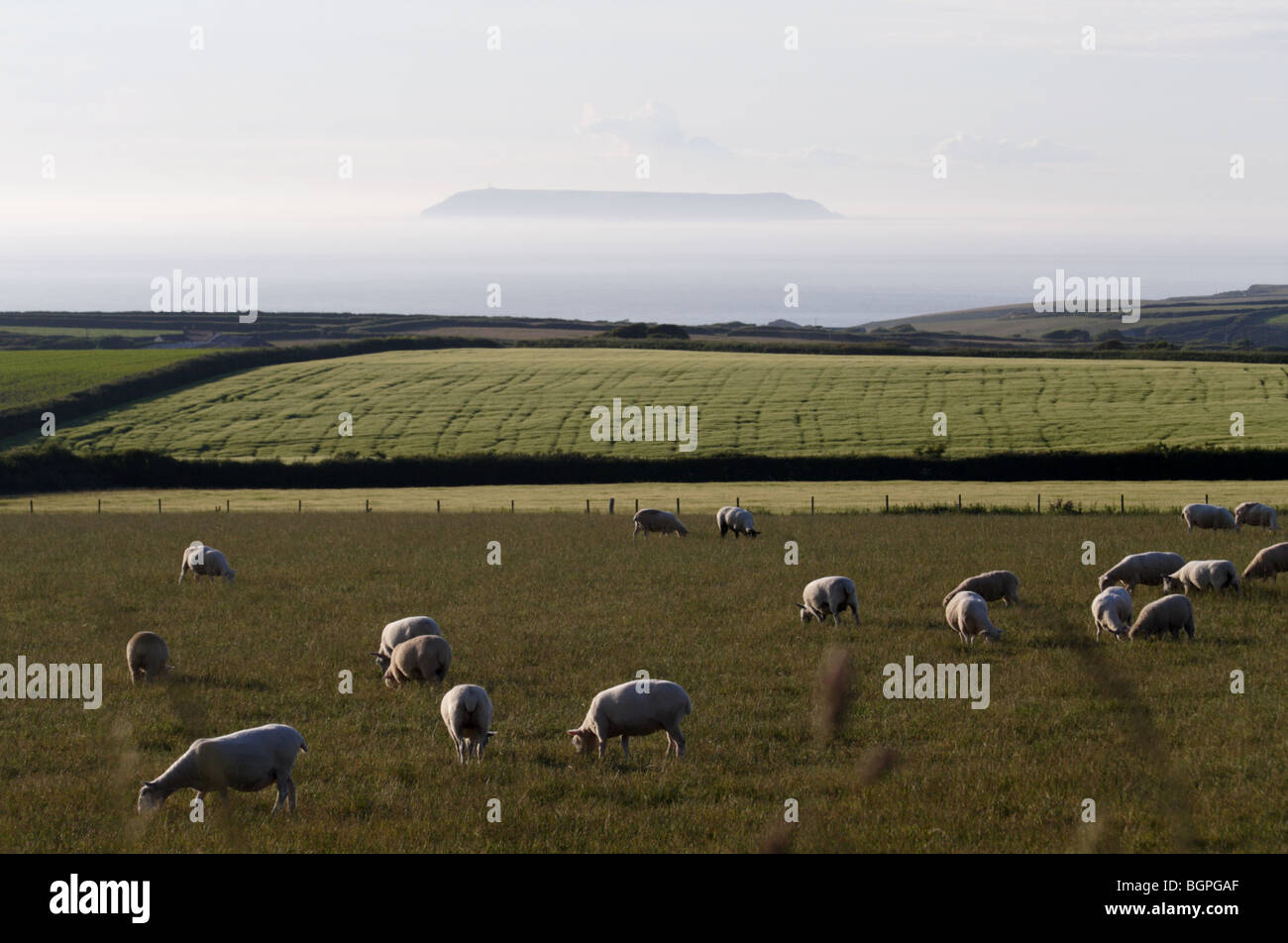Lundy Island nestles in the misty sea with fields of sheep in the foreground - Stock Image