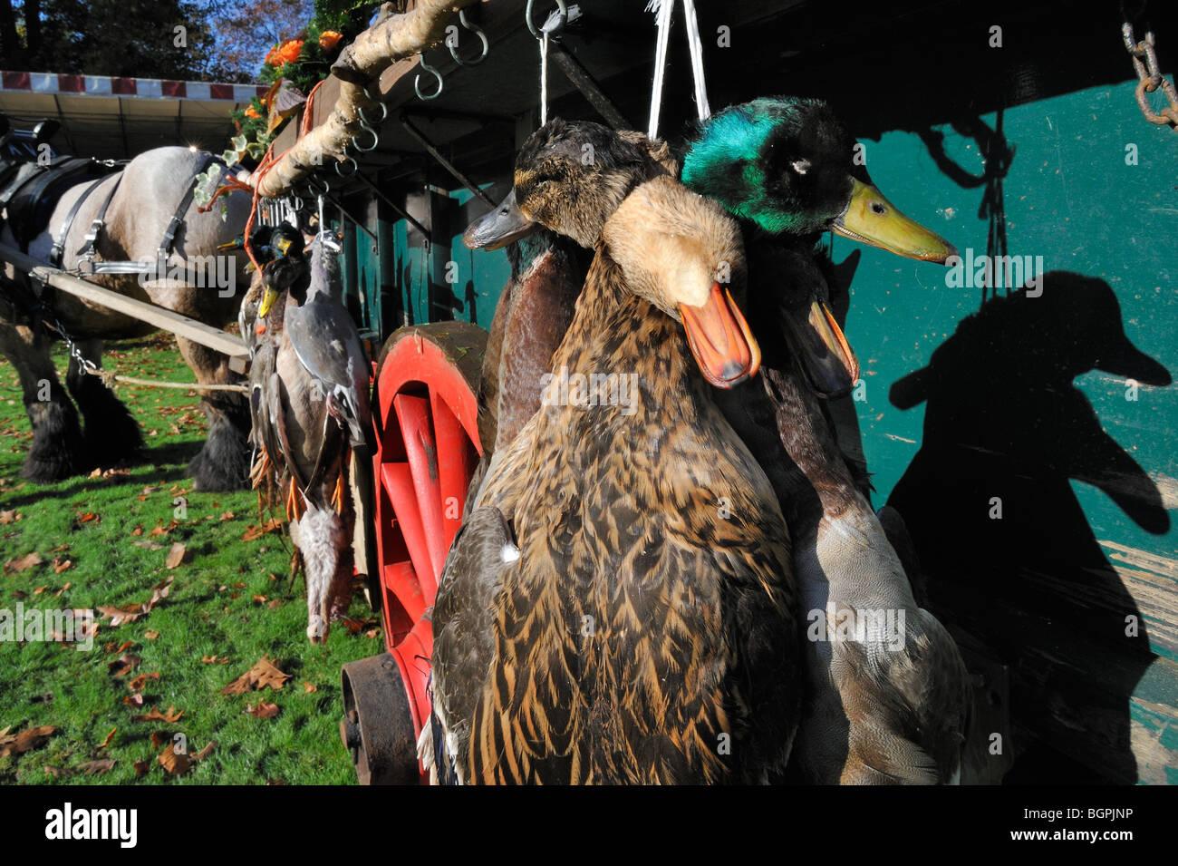 Cart with hunting game - mallard, wood pigeon, pheasant, hare - during the commemoration of Saint Hubert / Hubertus, - Stock Image