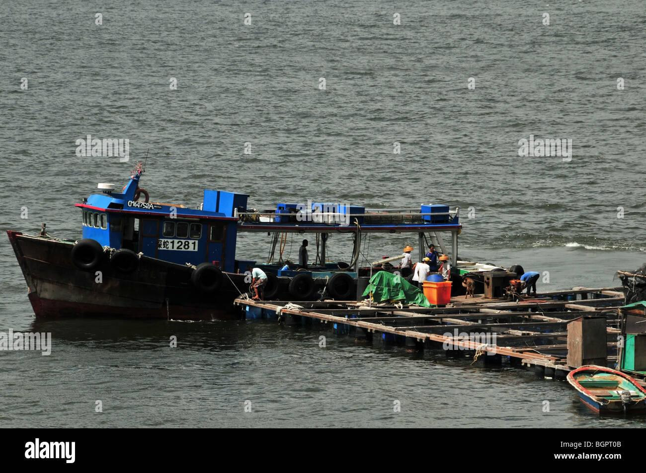 Fishing boat loading up with fish from a fish farming raft, Sok Kwu Wan, Lamma Island, Hong Kong, China - Stock Image