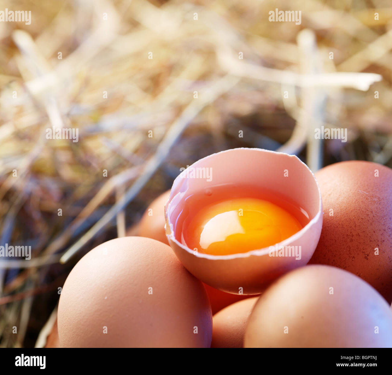 Chicken eggs in the straw with half a broken egg in the morning light. - Stock Image