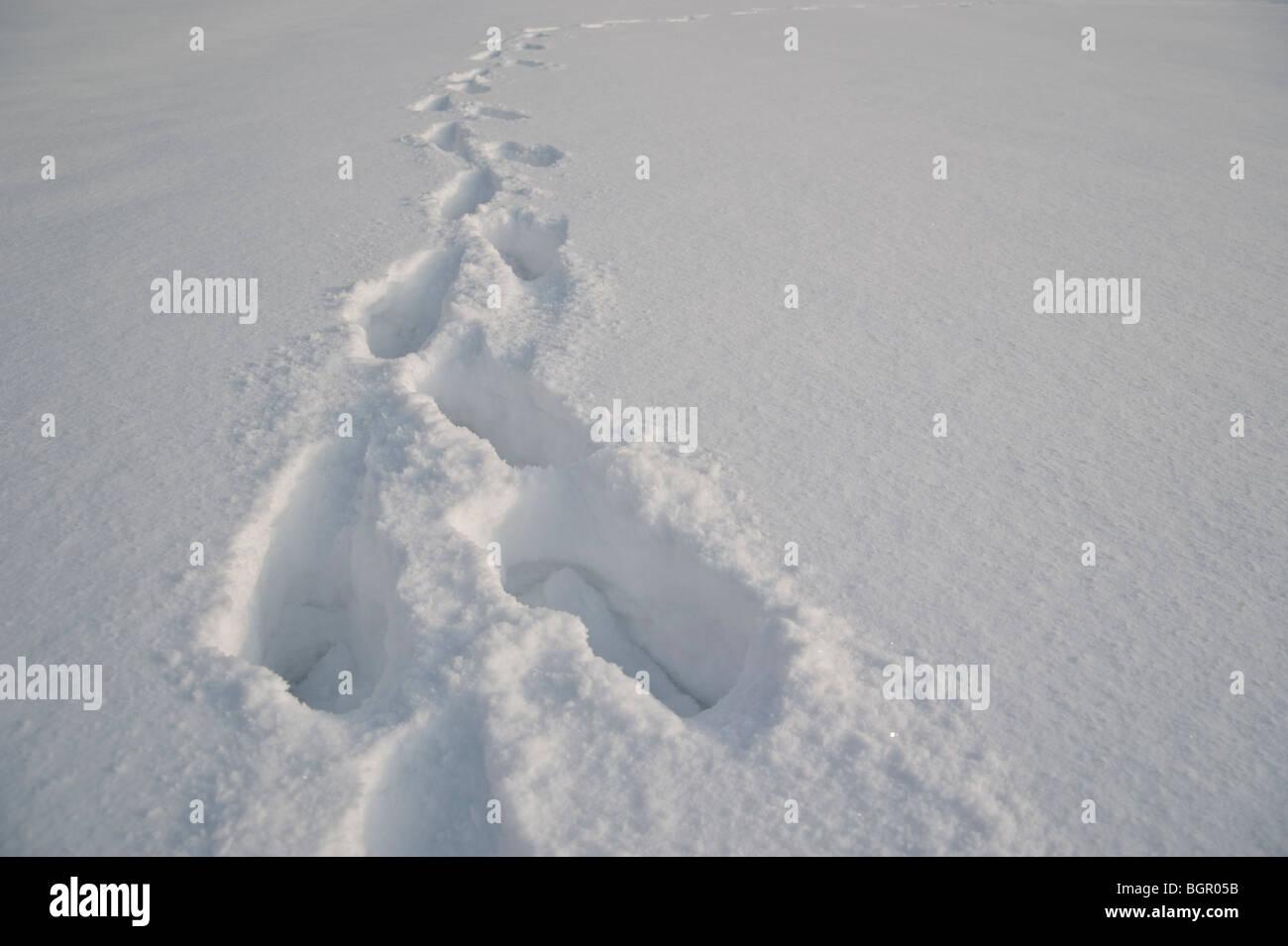 Human footprints in fresh snow, Jelenia Gora, Poland. Stock Photo