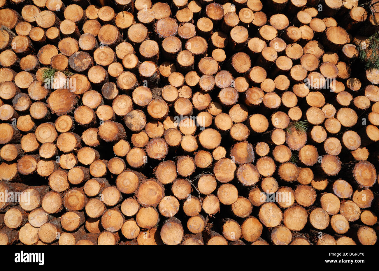 Many cuts of sawed logs form wood stack background. - Stock Image