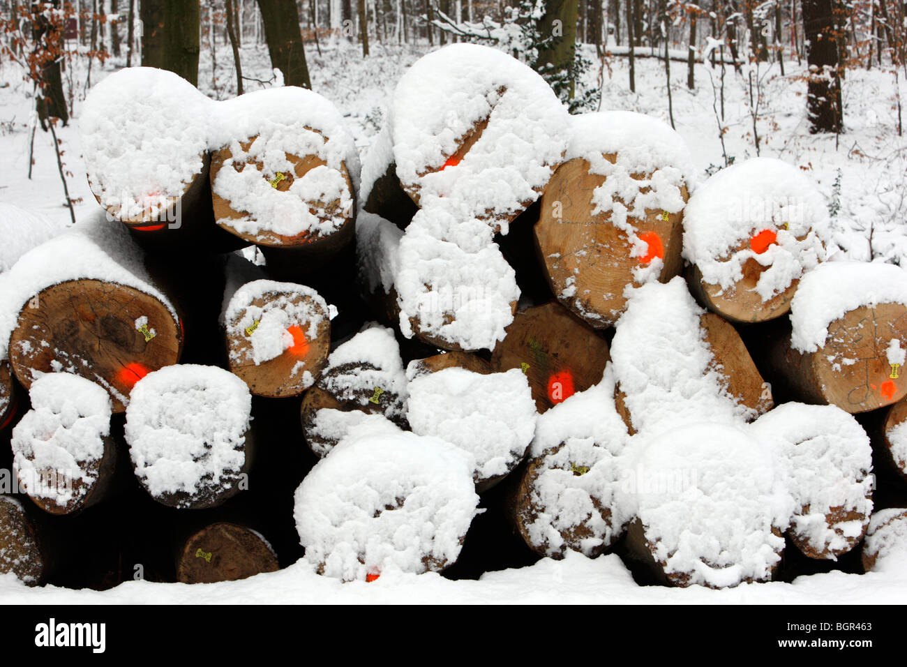 marked tree logs, winter, snow, Essen, NRW Germany - Stock Image