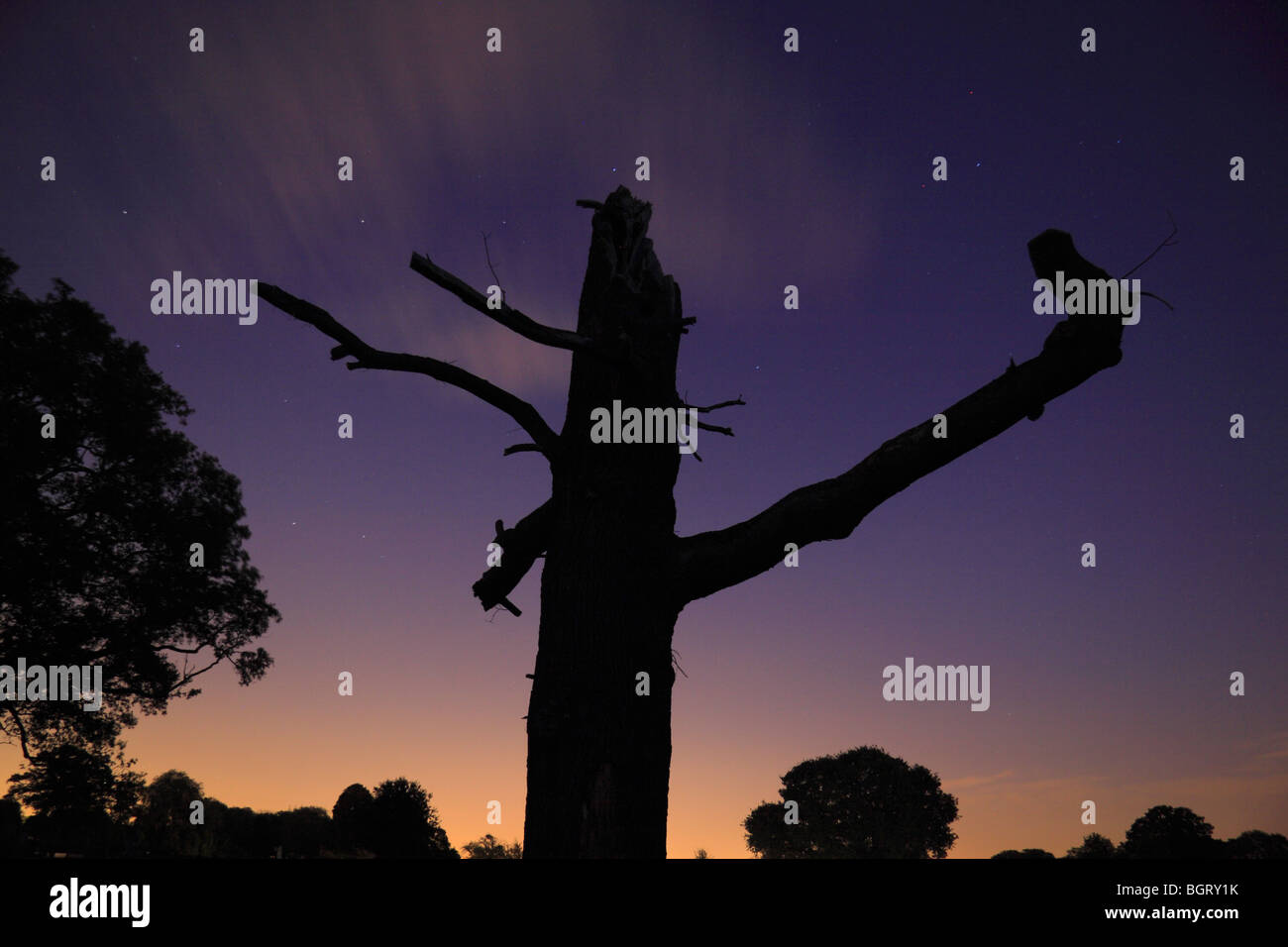 Profile of a dead tree with a stunning sky in Bushy Park, Richmond, UK at sunset. - Stock Image