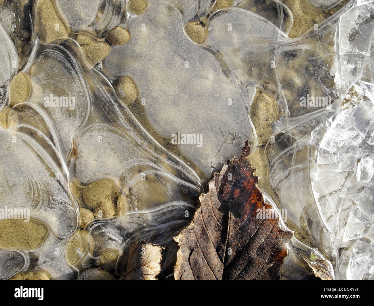 Frosty pebbles and leaf in Radley, Oxfordshire 2 - Stock Image