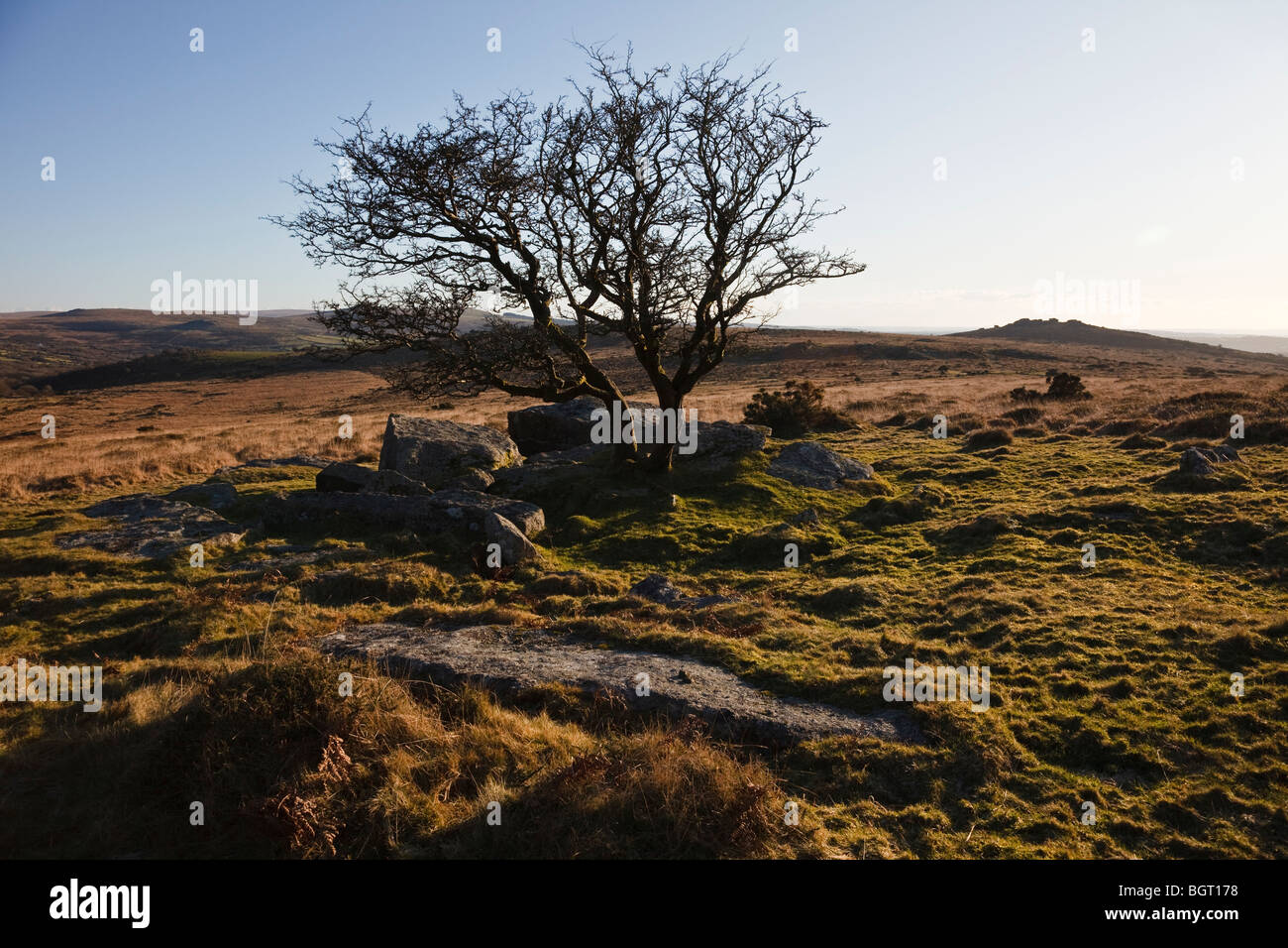 View towards Heckwood Tor from Whitchurch Common, Dartmoor. - Stock Image
