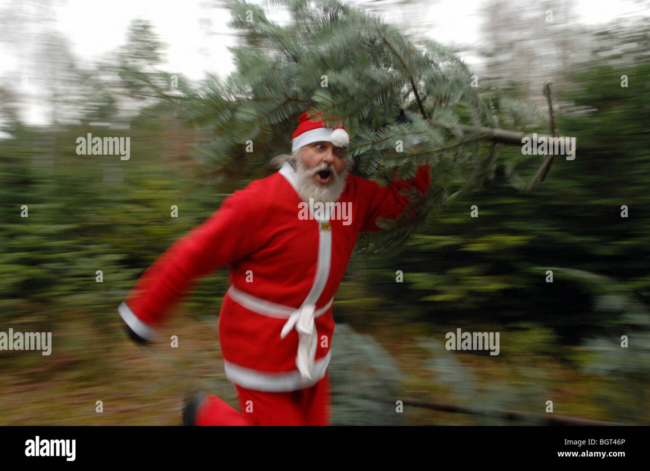 Santa Claus with a fir tree - Stock Image