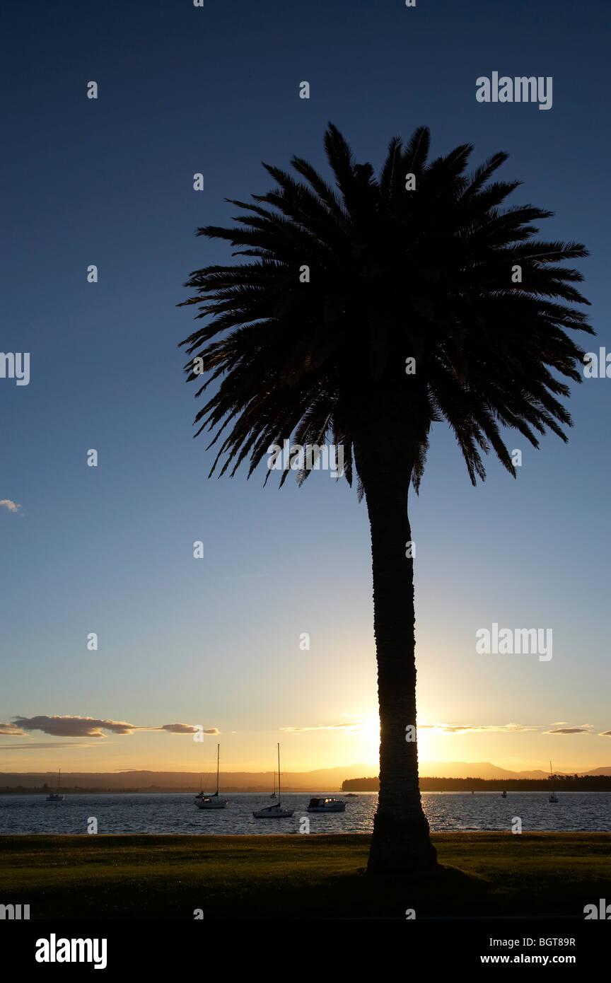 Palm Tree and Yachts at Sunset, Tauranga Harbour, Mount Maunganui, Bay of Plenty, North Island, New Zealand Stock Photo