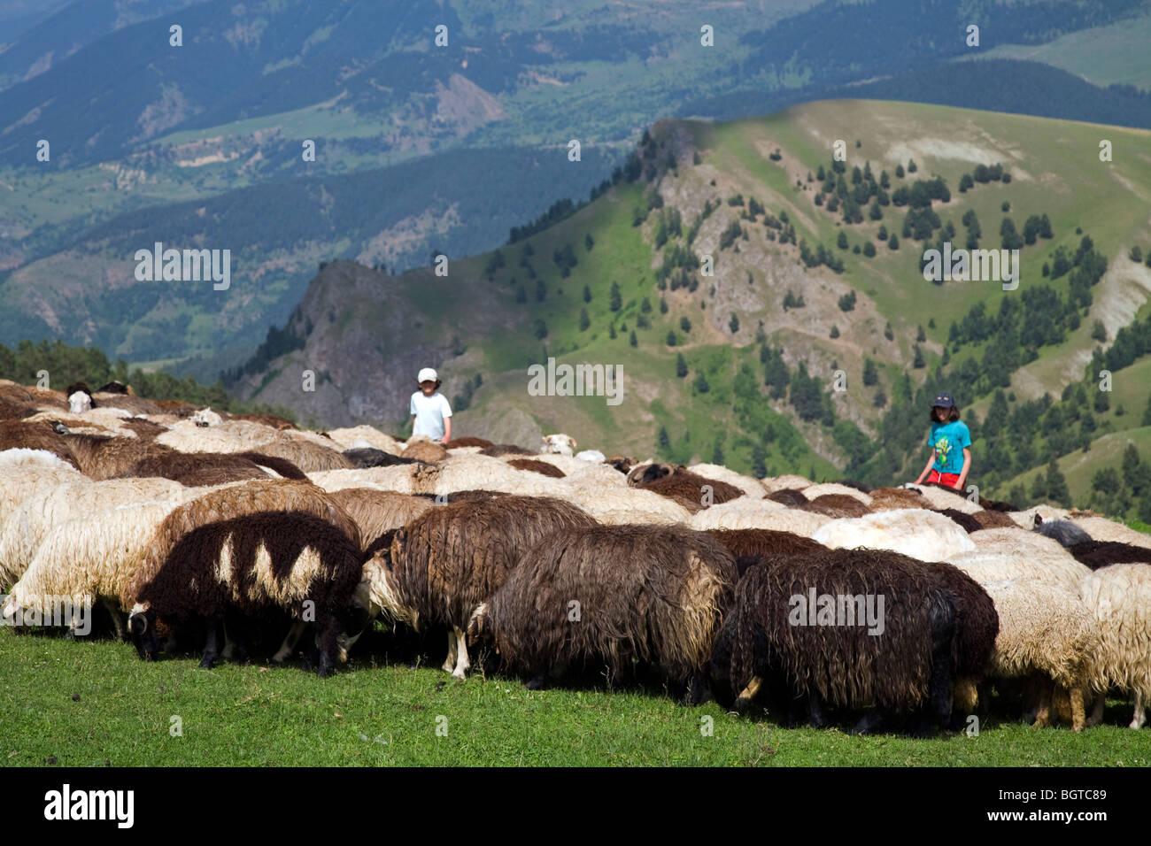 Shepherd girls and livestock, Ardanuc Artvin Turkey - Stock Image