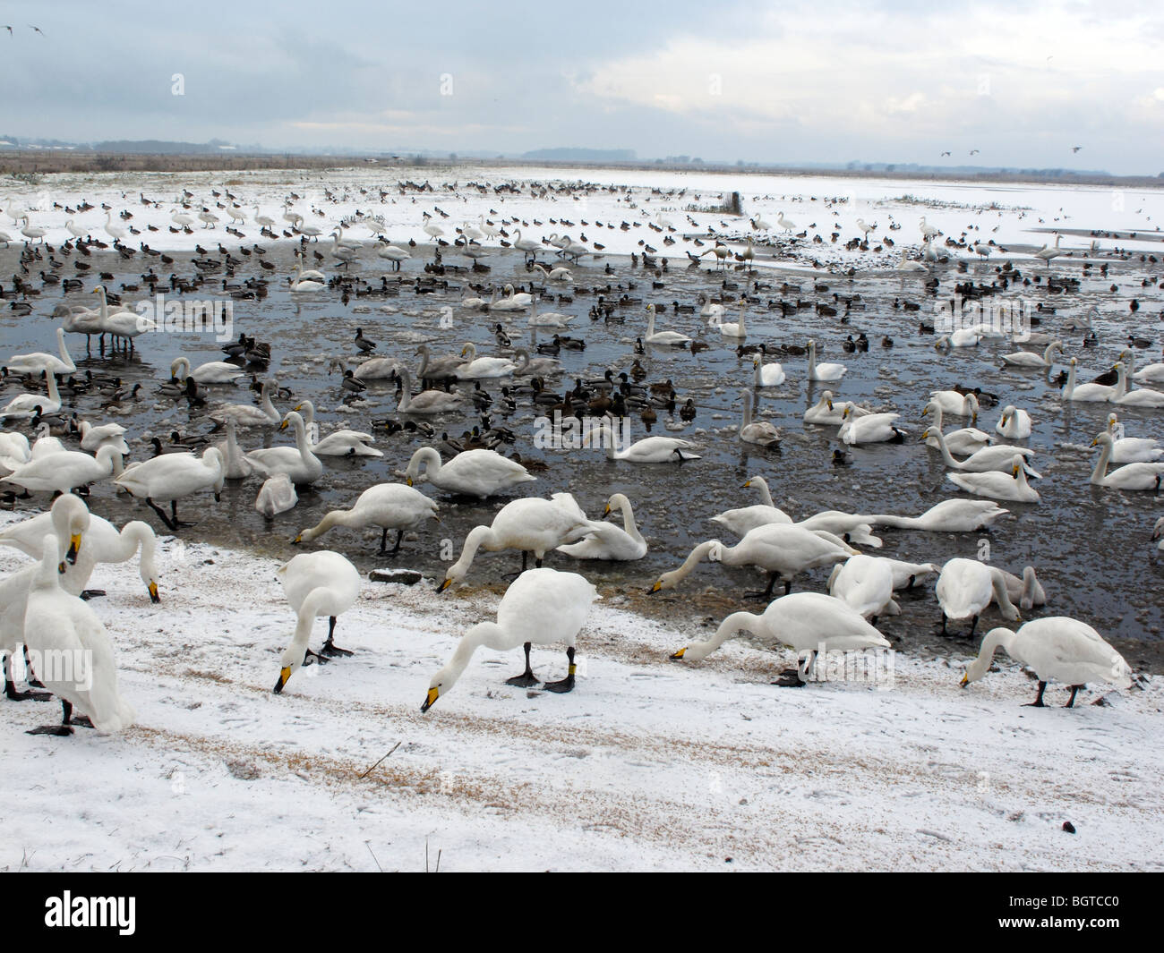 Martin Mere Wildfowl and Wetlands Trust reserve, in winterly conditions Lancashire, UK, winter 2009 - Stock Image