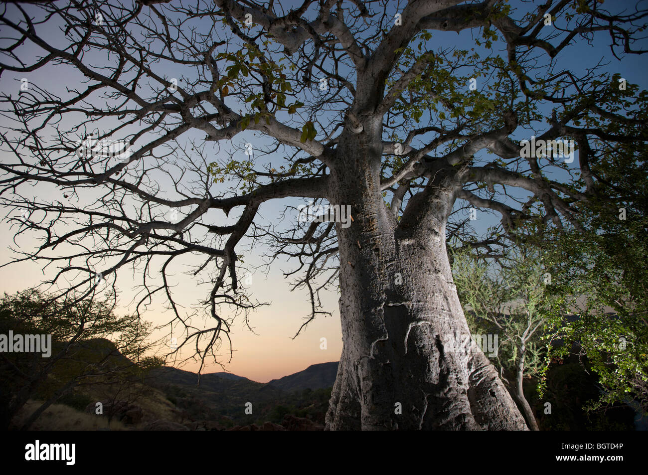 Floodlit Baobab tree next to Epupa Falls, Kunene River, Kaokoland, Namibia - Stock Image
