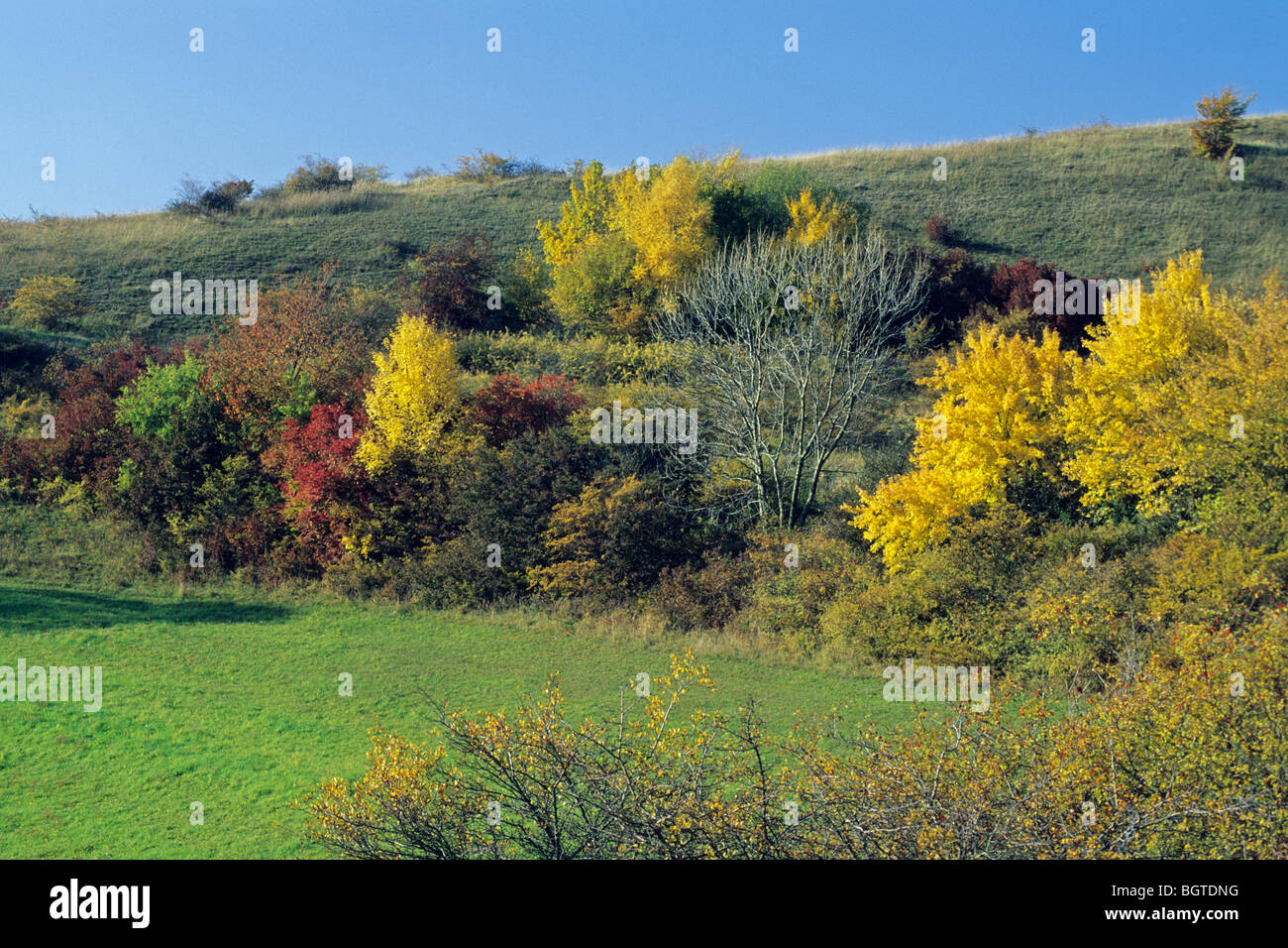 Extensive Hedge in Autumn Colour Stock Photo