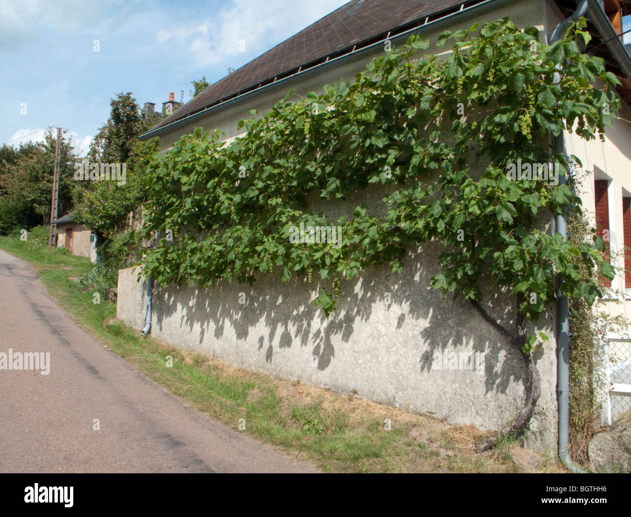 grape vine wall road France house Stock Photo