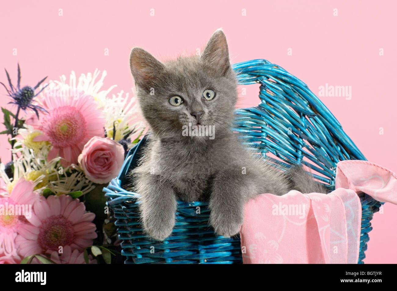 domestic cat - grey kitten in basket besides flower bouquet Stock ...
