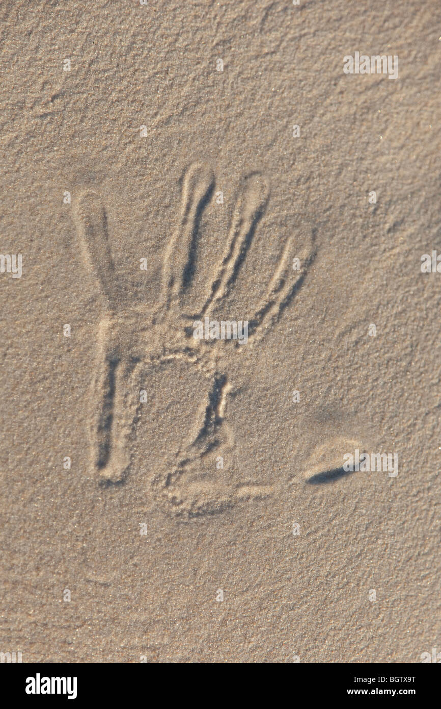 Text written in the beach - Stock Image