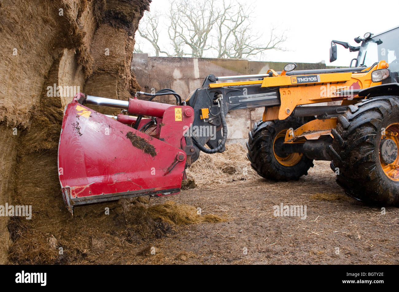 Shear grab at silage pit face cutting a section of silage. This keeps the silage face airtight - Stock Image
