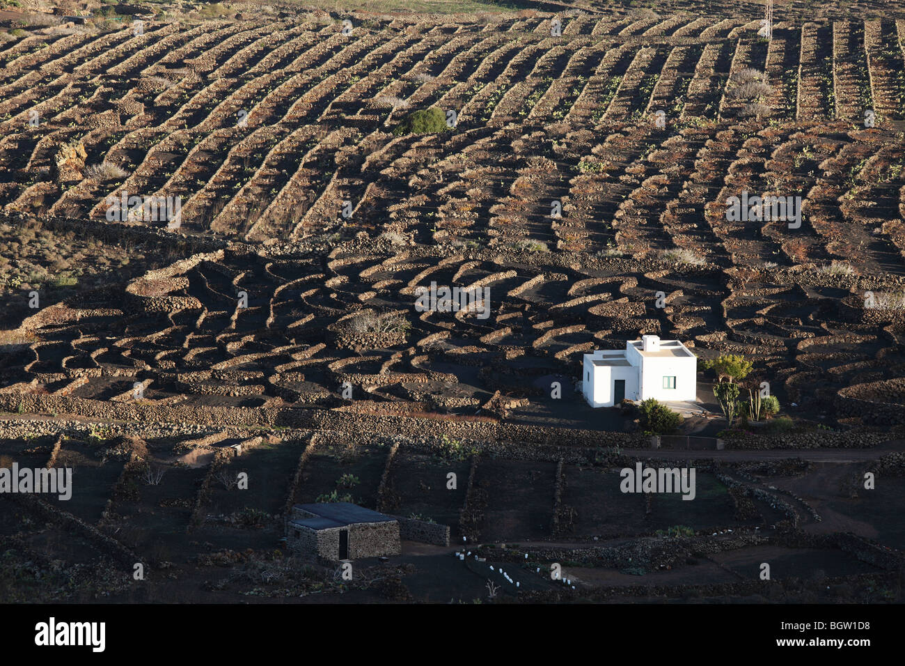 Agricultural landscape with supporting walls near Ye, Lanzarote, Canary Islands, Spain, Europe - Stock Image