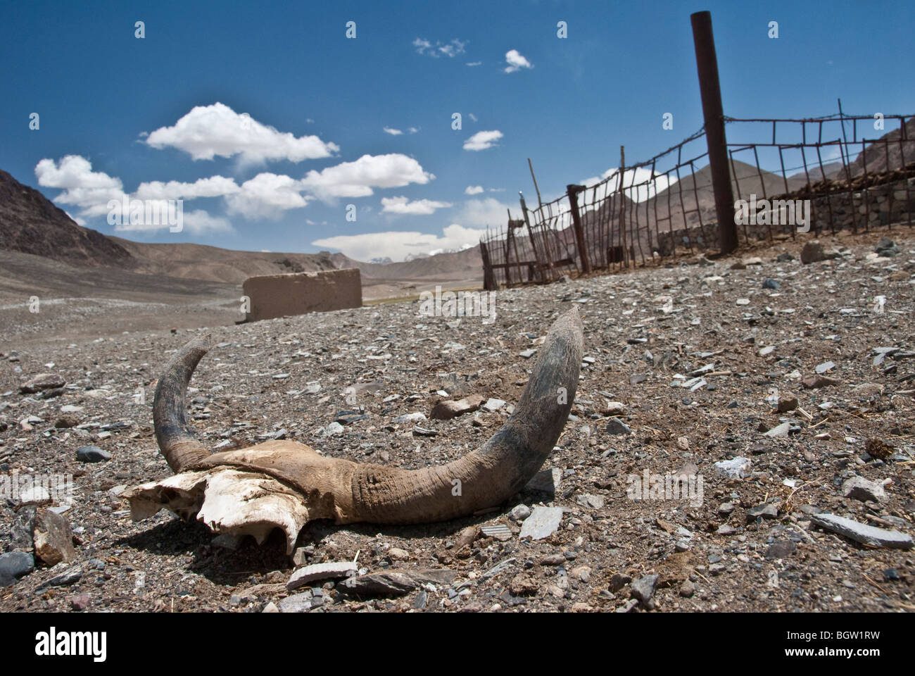 View of the remains of an animal skull in the Pamir Highway Plateau near Murgab, Tajikistan - Stock Image