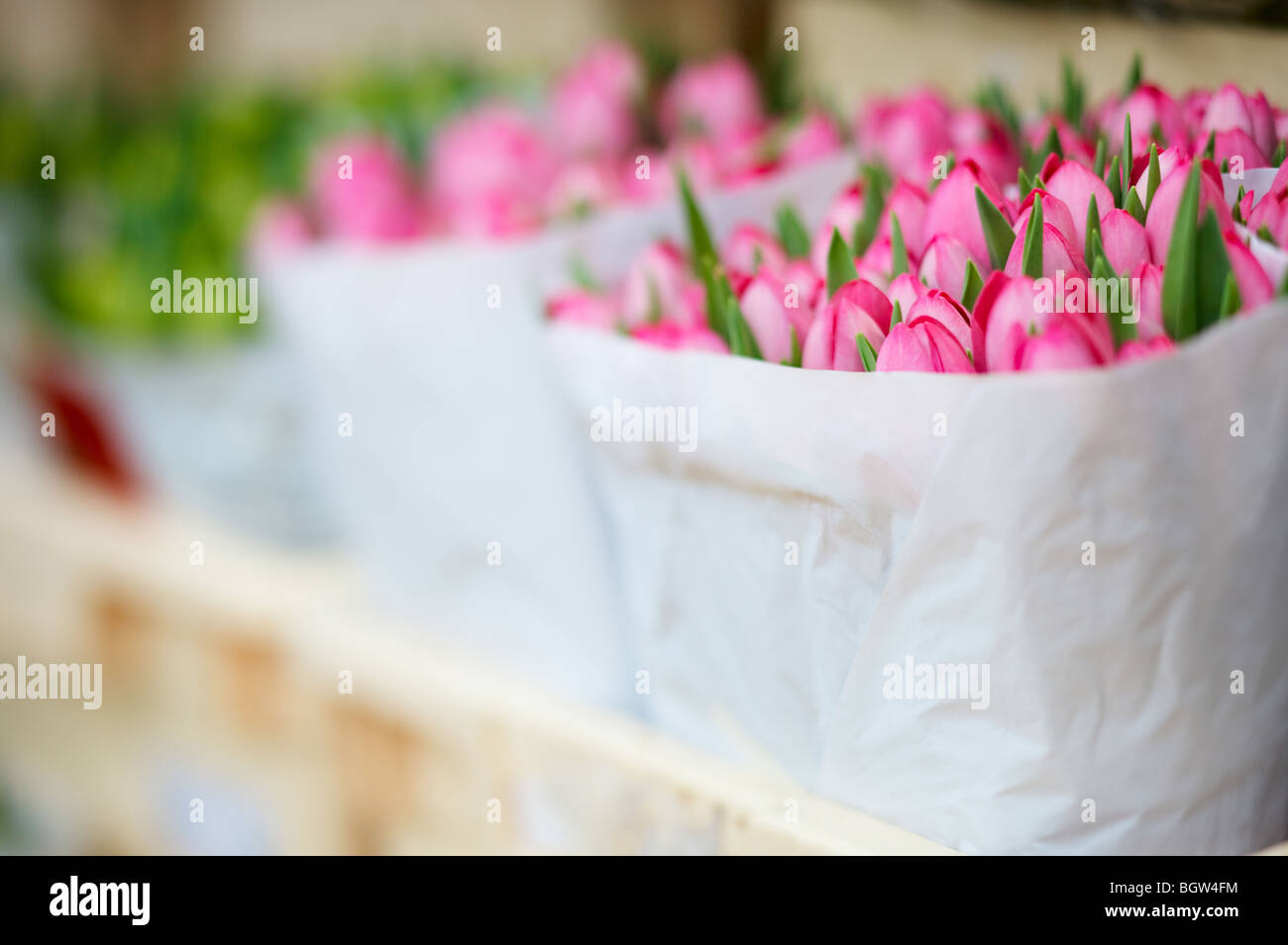 Fresh Bunch Of Tulips In Paper Bag At Floating Flower Market In
