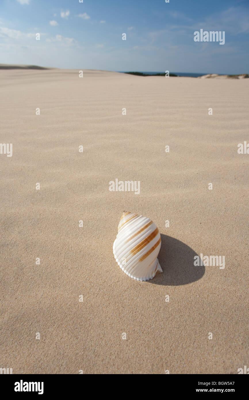 Big shell on sand - Stock Image